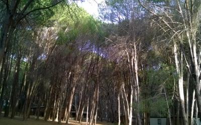 The Adventure Begins – Mountain Breeze – Stellenbosch